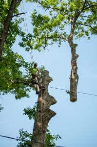 Dubois Tree Service